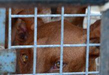 Foto: Hlas zvířat.