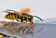 Foto   British Pest Control Association / Flickr.com