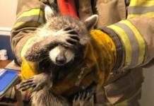 Foto: Facebook/ City of Dalton Fire Department